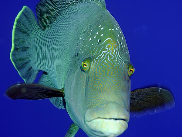 «Человеческие» лекарства – причина появления рыб-гермафродитов